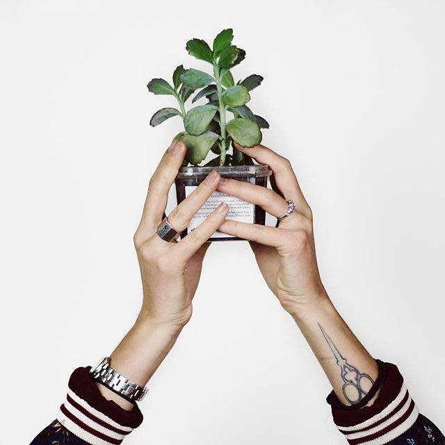 holding plant