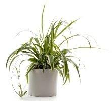 plantinpot